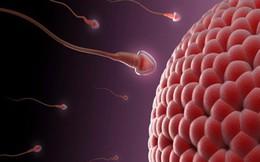 4 điều quan trọng nam giới cần tránh để không làm 'hỏng' tinh trùng, suy giảm khả năng yêu