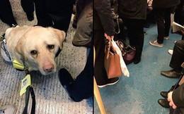 """Chuyện trên """"con tàu vô cảm"""": Người đàn ông mù bật khóc khi cả toa tàu đông đúc không ai nhường chỗ cho ông và chú chó dẫn đường"""