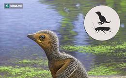 Đã từng tồn tại loài chim nhỏ chỉ bằng con gián, bạn cùng thời với khủng long