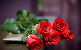 Cận cảnh hoa hồng dát vàng cho ngày 8-3 ở Trung Quốc