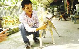 Chàng trai 8X nuôi chó Phú Quốc kiếm hàng trăm triệu đồng mỗi năm
