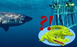 Hỏi khó: Từ lâu chúng ta đã lặn biển cùng cá mập, nhưng với... cá sấu thì sao?