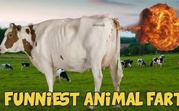 """Động vật có """"thả bom"""" không? Một nhà khoa học đã liều mình trải nghiệm và nhận cái kết bốc mùi"""