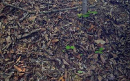 """""""Tử thần"""" đang ngụy trang hòa vào đám lá này, bạn sẽ trả giá đắt nếu không quan sát kỹ!"""