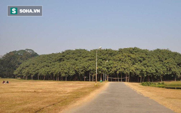 Mục sở thị cây đa lớn nhất thế giới, nhìn xa cứ ngỡ khu rừng