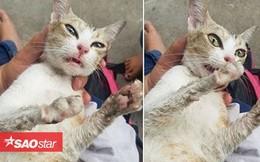 Chú mèo đang mang bầu bị đánh đập tạt nước sôi đến động kinh khiến dân mạng phẫn nộ