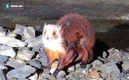 Thám hiểm hang động dài nhất châu Á, các nhà khoa học phát hiện sinh vật kỳ lạ