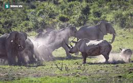 Tê giác nổi điên: Một mình lao xồng xộc đuổi đàn voi chạy toé khói