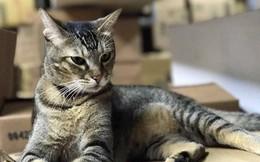 Mèo chuyển hàng lậu cho tù nhân