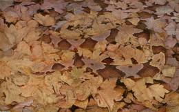Đám lá rụng này ẩn chứa nguy hiểm có thể khiến bạn mất mạng, bạn nhìn ra không?