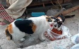 Biểu cảm gương mặt của con mèo khi được cho ăn gây sốt mạng xã hội Việt