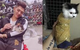 """Bị dân mạng phẫn nộ vì """"hành hạ"""" mèo bằng cuộn băng dính, người chủ lên tiếng"""