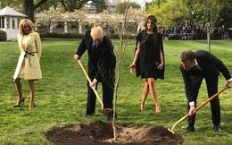 Cây sồi Tổng thống Trump và ông Macron trồng tại Nhà Trắng biến mất bí ẩn