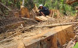 Tạm đình chỉ 6 cán bộ kiểm lâm để xảy ra phá rừng ở Quảng Nam