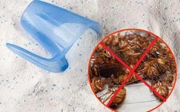 Bí mật của căn bếp sạch bong không có một con gián nhờ công thức đơn giản này