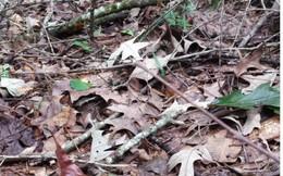 Bước vào đám lá khô này, bạn có thể bỏ mạng nếu không chịu để ý dưới chân!