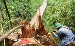 Hàng loạt cán bộ kiểm lâm Quảng Nam đột ngột xin nghỉ