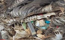 Hình ảnh trong bụng một chú chim khiến nhiều người giật mình