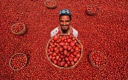 24h qua ảnh: Nông dân thu hoạch khoai tây đỏ rực Bangladesh