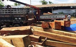 Gia Lai: Bắt giám đốc công ty giấu 60m3 gỗ lậu trong kho