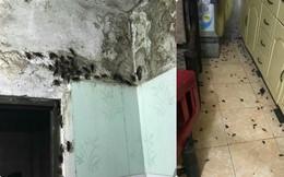 Sau cơn mưa, hình ảnh xuất hiện trong một căn nhà khiến dân mạng kinh hãi