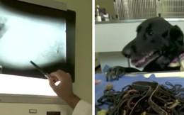"""Chó cưng ốm """"thập tử nhất sinh"""", khi phẫu thuật bác sĩ tá hỏa với phát hiện bên trong"""