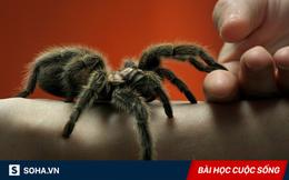 Chạm trán nhện độc, người nông dân bất ngờ khiến con vật chết thảm dưới bàn chân đầy bùn