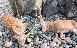 Thực tại đáng sợ: Rác thải biển giờ còn giết dần các loài trên cạn