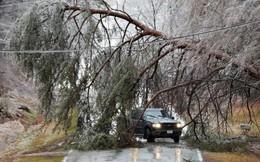 Tác nghiệp giữa trời mưa bão, hai phóng viên bị cây đổ đè chết ngay tại hiện trường