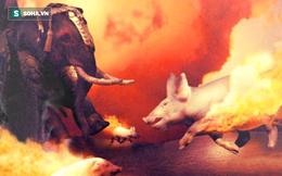 Giải mã vũ khí kỳ lạ của quân La Mã: Lợn diệt voi!