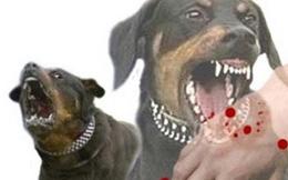 Chó dại cắn vài năm vẫn phát bệnh, phải tiêm phòng khi bị chó cắn