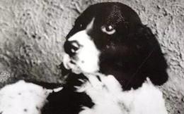"""Jim - chú chó phi thường nhất lịch sử: Nghe hiểu nhiều thứ tiếng khác nhau, """"thánh tiên tri"""" đoán đâu trúng đó"""