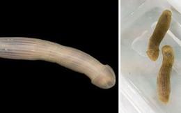 """10 loài sinh vật """"kinh dị"""" ẩn sâu dưới đại dương - có loài không miệng, không ruột hay hậu môn"""