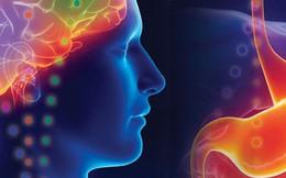 Có thể bạn chưa biết: Cơ thể chúng ta có đến hai bộ não!