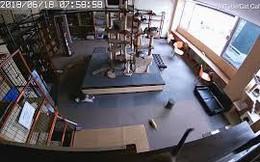 """Nhật Bản: Ngửi thấy mùi """"không lành"""", đàn mèo chạy toán loạn tìm chỗ trốn chỉ vài giây trước khi có động đất"""