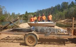 """24h qua ảnh: Bắt sống cá sấu """"quái vật"""" nặng 600kg sau 8 năm săn tìm"""