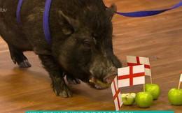 """Cộng đồng mạng nước Anh đòi làm thịt """"siêu lợn tiên tri"""" vì tội đoán sai kết quả trận bán kết World Cup Anh - Croatia"""