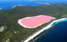 Hồ màu hồng lạ lùng giữa vùng đảo nước Úc: Điều gì tạo nên màu sắc thú vị này?