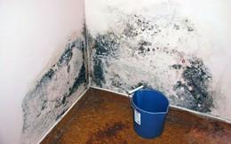 Nấm mốc trong nhà có những màu sắc này thì phải xử lý càng nhanh càng tốt, đừng để hỏng nhà và hại cả sức khỏe