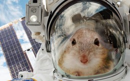 20 con chuột sẽ được du hành vũ trụ để giúp chúng ta tìm hiểu về cách sống sót trên sao Hỏa