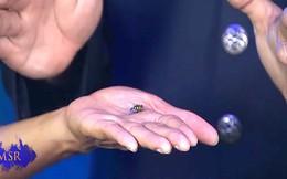 Màn biểu diễn khó tin: Hồi sinh con ruồi đã chết!
