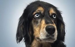 Thêm một lý do để nuôi chó: Chúng sẽ đến bên chủ nếu như chúng ta khóc