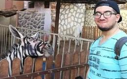 Thanh niên háo hức vào vườn thú xem ngựa vằn ai ngờ phát hiện cả chuồng toàn là lừa cải trang