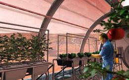 Trồng cây trên sao Hỏa khó đến mức nào? Đáp án là không tưởng!