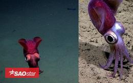 """Sinh vật """"bánh bao"""", mực đổi màu hay nhiều loài kỳ lạ dưới lòng biển sâu"""