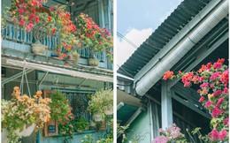 Sự thật chuyện ngôi nhà thơ mộng ở An Giang bị mất hơn 10 chậu cây
