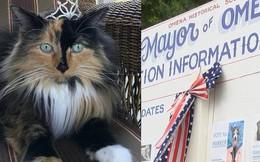 Chiến dịch tranh cử độc nhất tại Mỹ: Con mèo 9 tuổi lên chức thị trưởng sau khi vượt qua các đối thủ chó, công, dê, gà