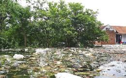 Nỗi lo dịch bệnh ở vùng ngập ngoại thành Hà Nội