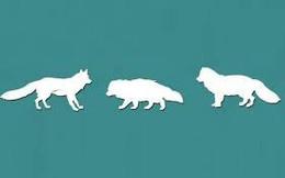 Bạn thấy con sói nào hùng dũng nhất, đáp án sẽ giúp bạn tìm ra điểm mạnh và điểm yếu của bản thân