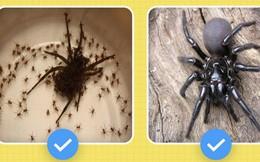 Hello! Tôi là nhện, nhưng tôi có làm gì mấy ông đâu mà bị ghét thế nhỉ?